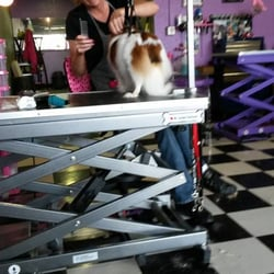Kanine kreations dog salon 10 foto 39 s dierenservices for A kreations salon