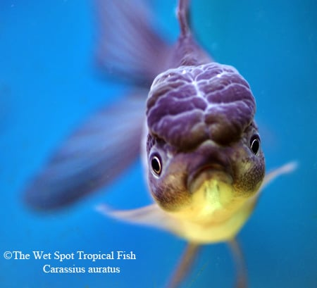 Photos for wet spot tropical fish yelp for The wet spot tropical fish