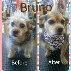 Dog Grooming Dubuque