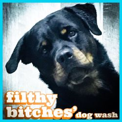 Filthy bitches dog wash 29 photos 11 reviews pet services photo of filthy bitches dog wash colorado springs co united states solutioingenieria Images
