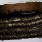 Bee Swarm Had Photo Of Houston Removal Spring Tx United States