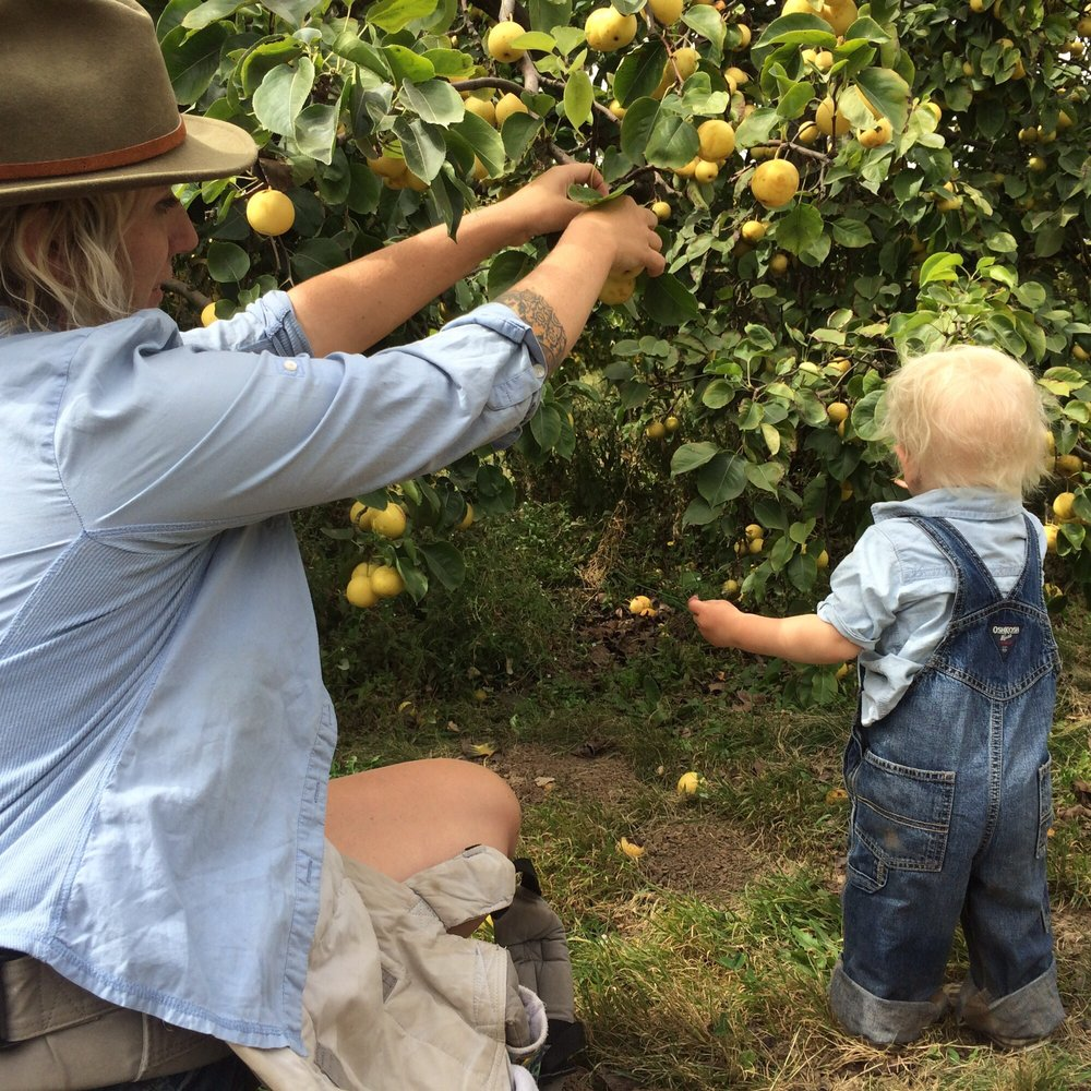 Adair's Orchards: 36452 Hwy 226 SE, Albany, OR