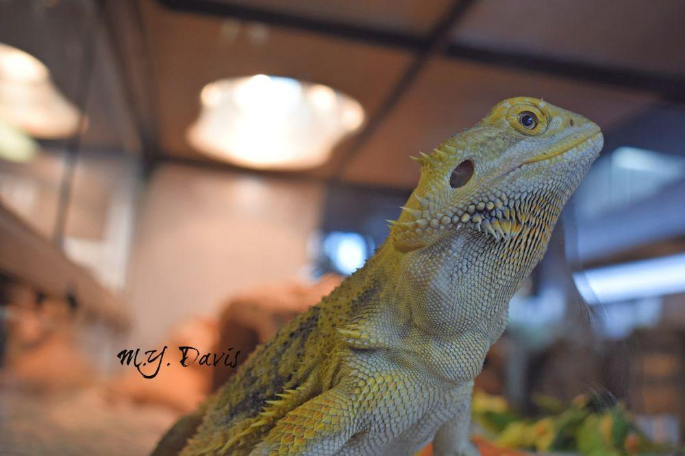 Hogtown Reptile Shop - 2104 SW 34th St, Gainesville, FL