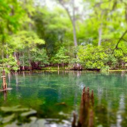 Things to do in steinhatchee fl