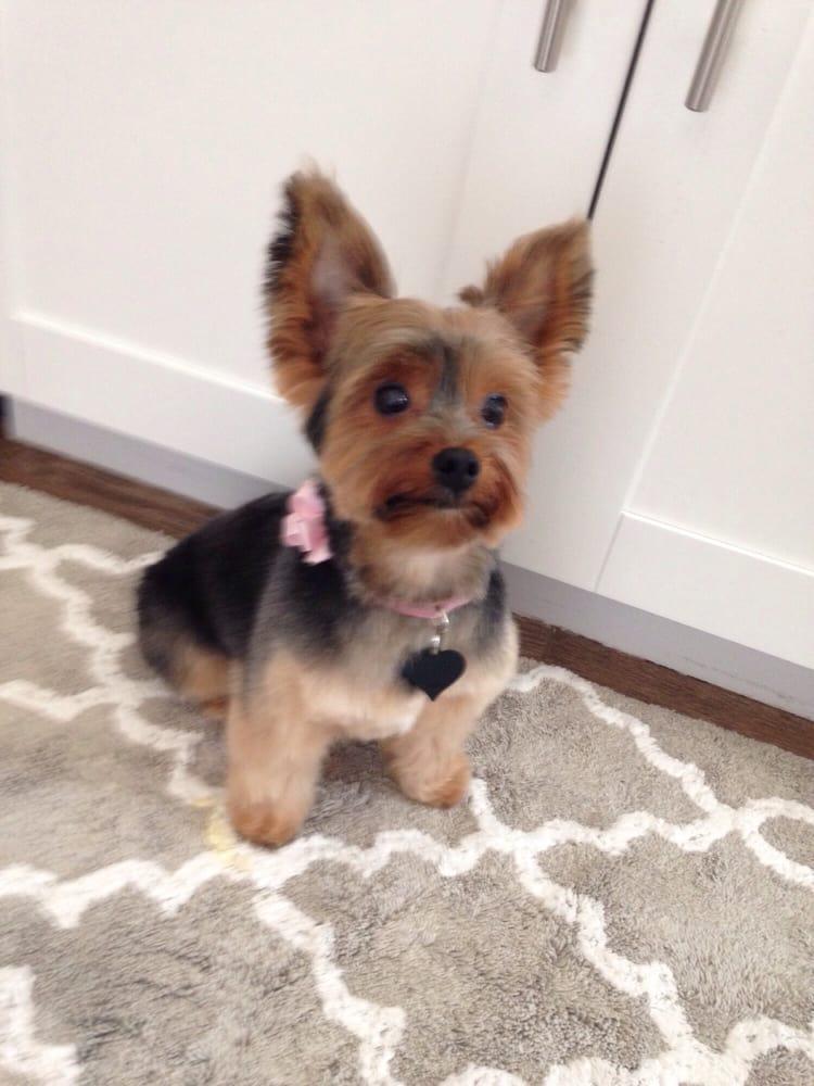 Shurcut Pet Parlour - 21 Reviews - Pet Groomers