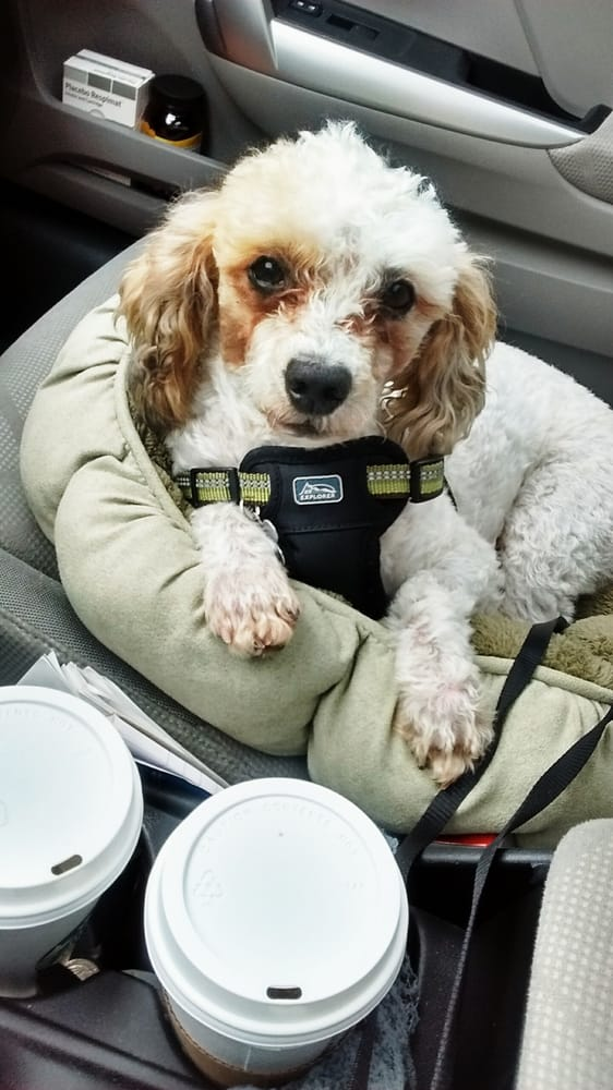 My dog in his harness yelp for Sierra fish and pets