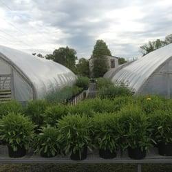 Photo Of Williams Greenhouses Nursery Sterling Va United States A Dozen