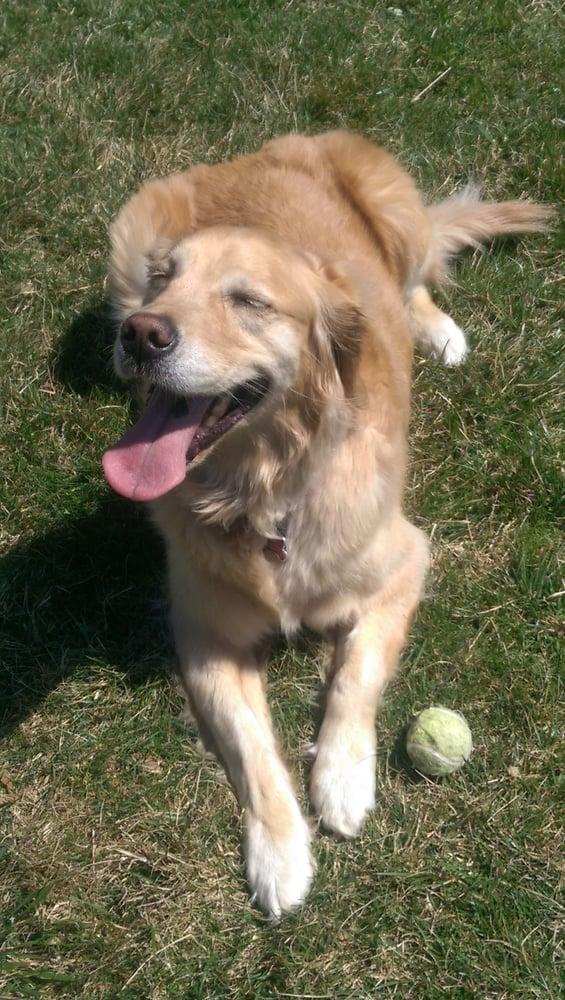 Pet Sitters, LLC: Timonium, MD