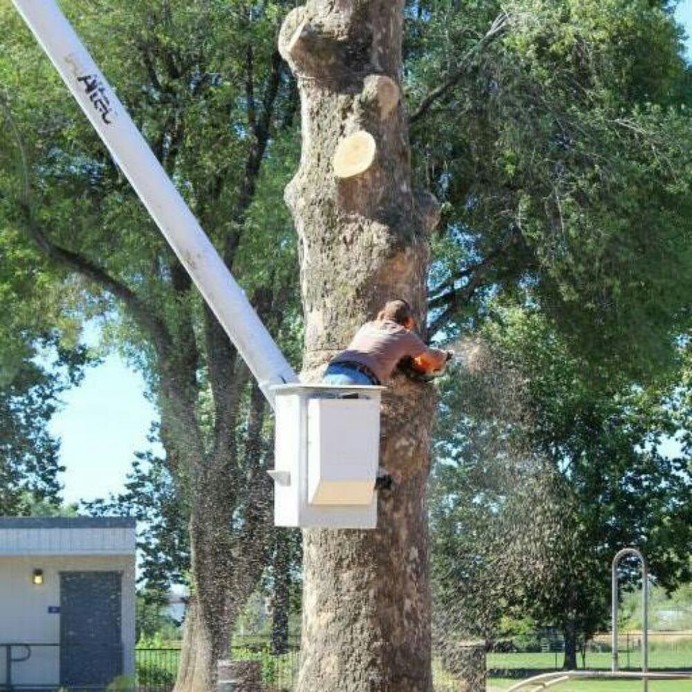 Professional Tree Service: Redding, CA