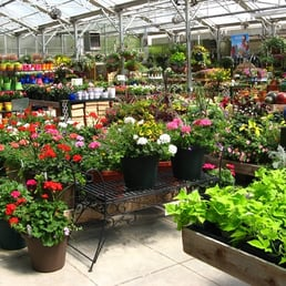Photo Of Homewood Nursery Garden Center Raleigh Nc United States The