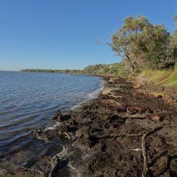 Belvidere Campground - Leschenault Western Australia - 2019