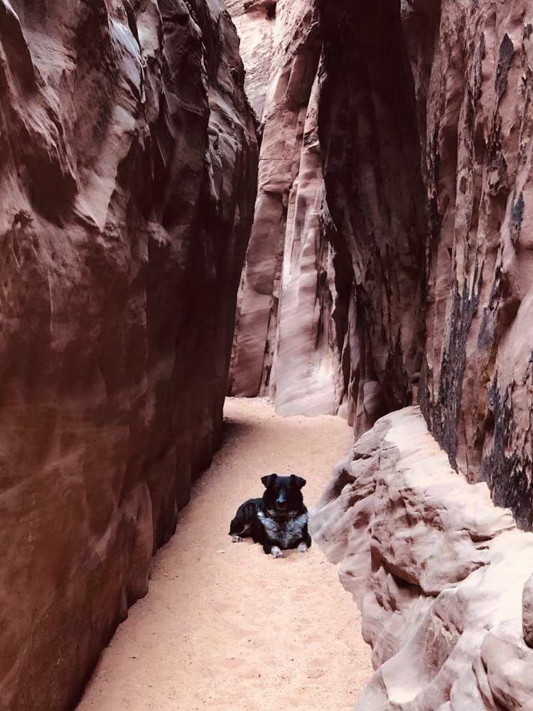 Grand Staircase Escalante National Monument: 755 W Main St, Escalante, UT