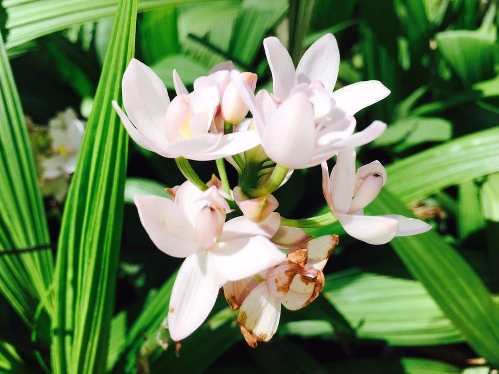 Kapolei Greenz - 163 Photos & 15 Reviews - Nurseries & Gardening ...