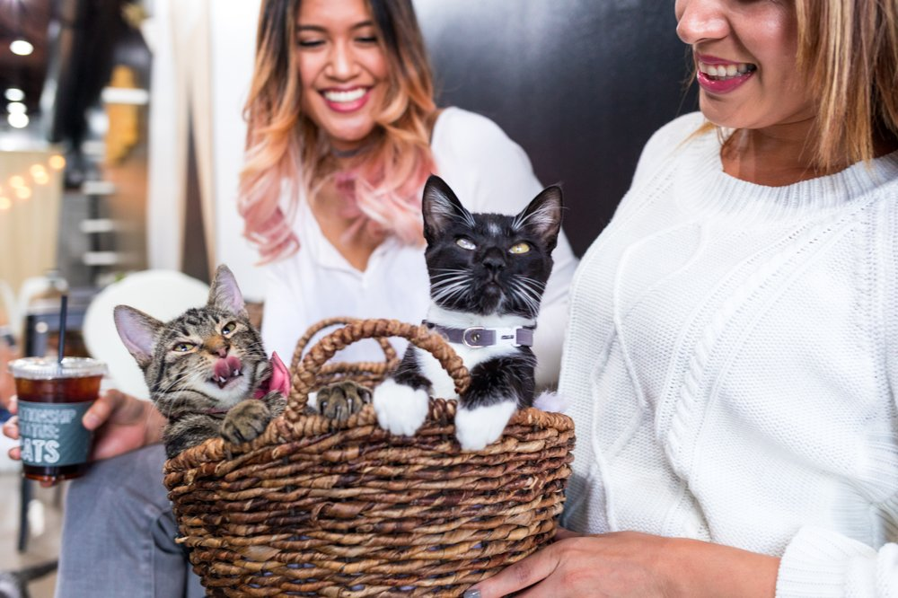 Crumbs & Whiskers - A Cat Cafe & Kitten Lounge