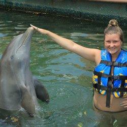 Dolphin Discovery Dreams Puerto Aventuras - 16 Photos