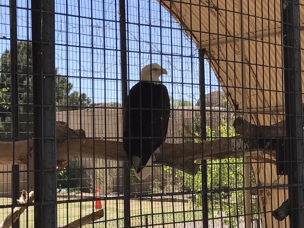 Spring River Park and Zoo: 1306 E College Blvd, Roswell, NM