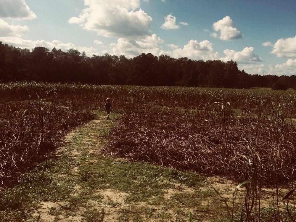 Photo of Spring Hill Tree Farm: Bainbridge, GA