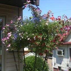 Photo Of Minter S Greenhouse Nursery Seattle Wa United States Hummingbirds Have