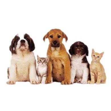 Padonia Veterinary Hospital: 9827 York Rd, Cockeysville, MD