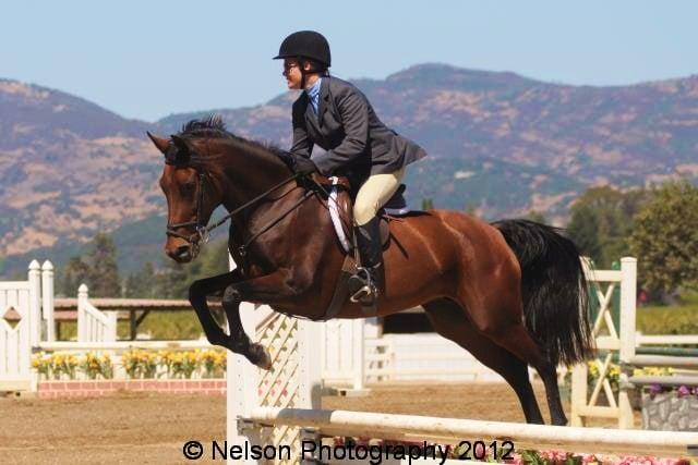 Jump For Joy Equestrian 39 Photos Horseback Riding