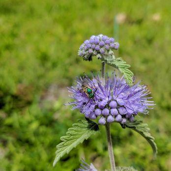 photo of quarryhill botanical garden glen ellen ca united states scary bee - Quarryhill Botanical Garden