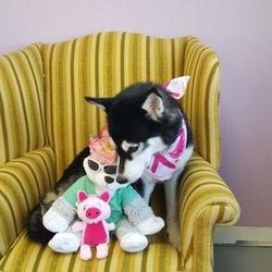Cheryls Best Friends Pet Grooming - 77 Photos & 19 Reviews