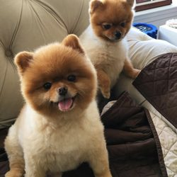 Lucky Puppy Pet Care Dog Walkers Stamford Ct Phone Number Yelp