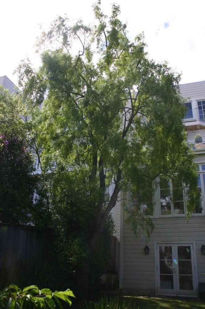 Cabrera Tree Care