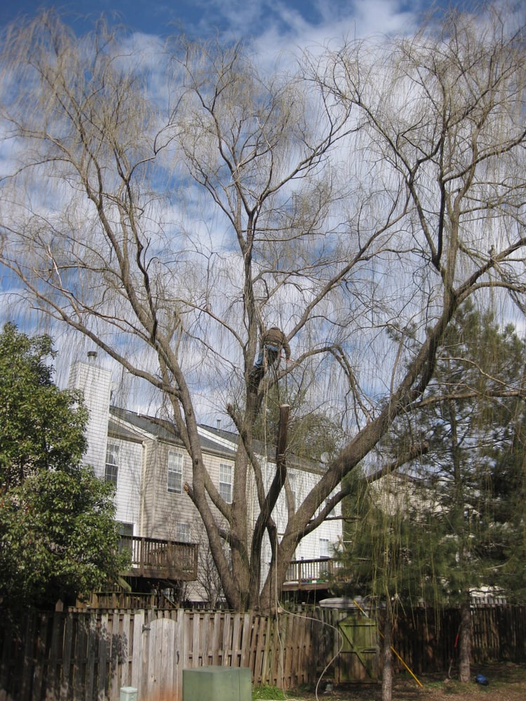 Four Brothers Tree & Landscaping: 9500 Fostern Ln, Manassas, VA