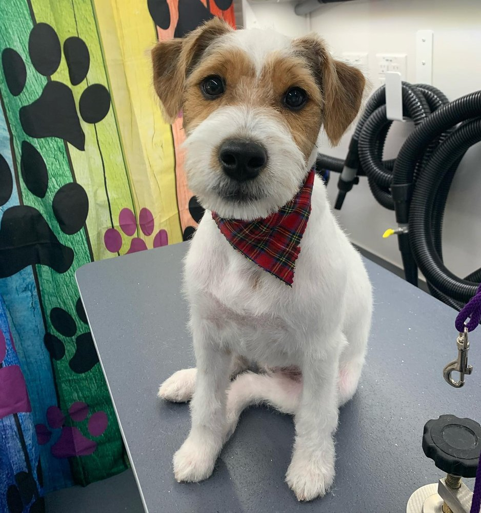 Wash'n Pawz Mobile Grooming: Smithtown, NY