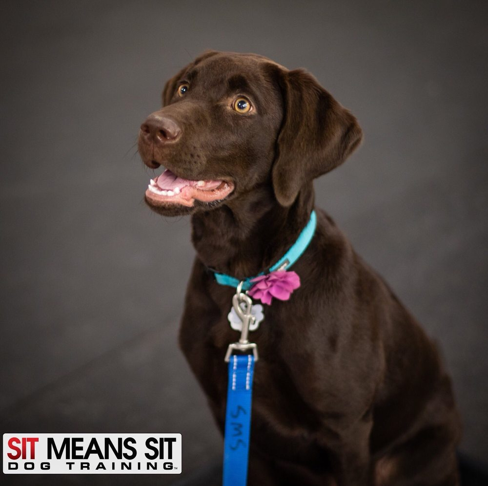 Sit Means Sit Dog Training - 13 Photos & 17 Reviews - Pet Training on