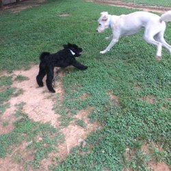 Electric City Stay & Play - Pet Sitting - 120 Charley Dr, Anderson