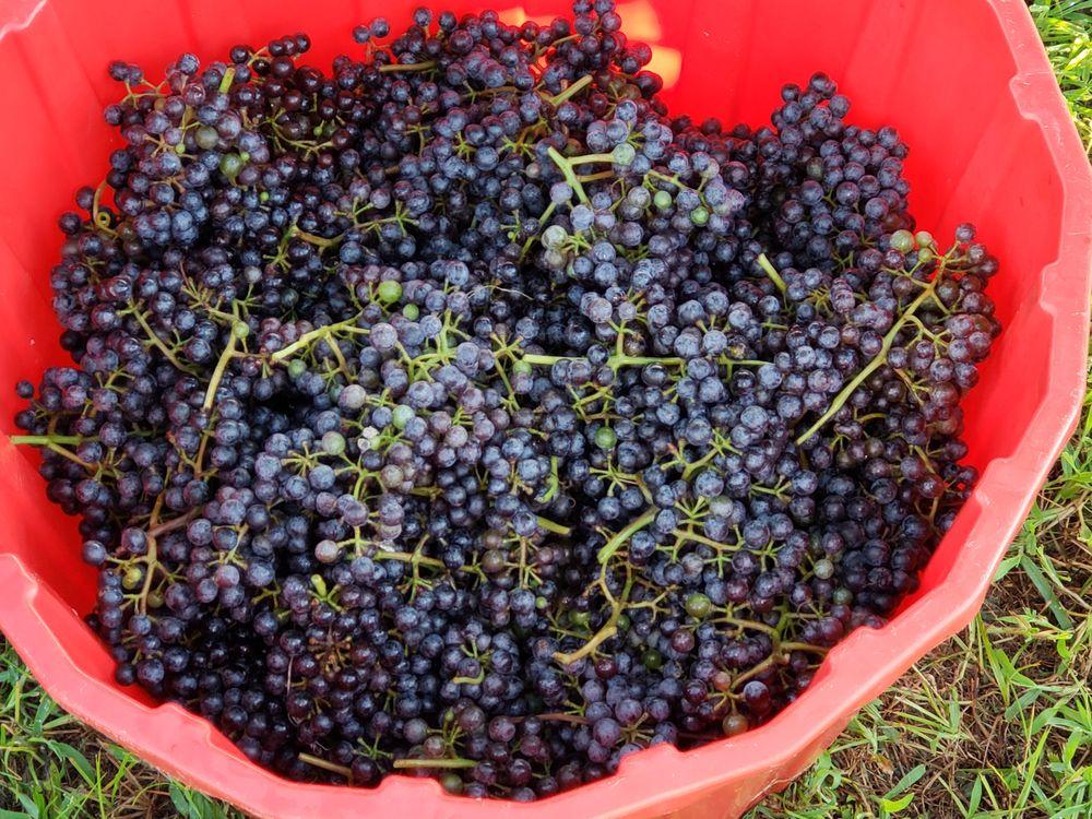 South Ridge Wine: 3297 Live Oak Rd, Luverne, AL