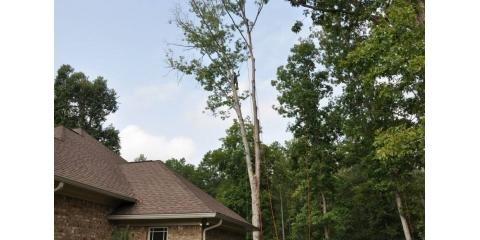 McAllister Tree Service: 409 Baldwin Rd, Cornelia, GA