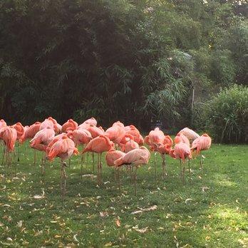 Menagerie Le Zoo Du Jardin Des Plantes 106 Photos 36 Reviews