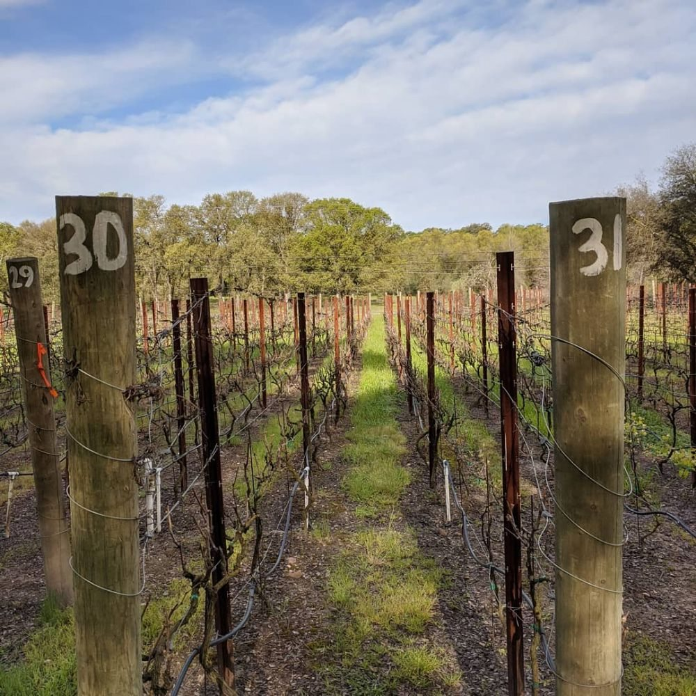 Matthew Gibson Winery: 6110 Martin Ln, Ione, CA