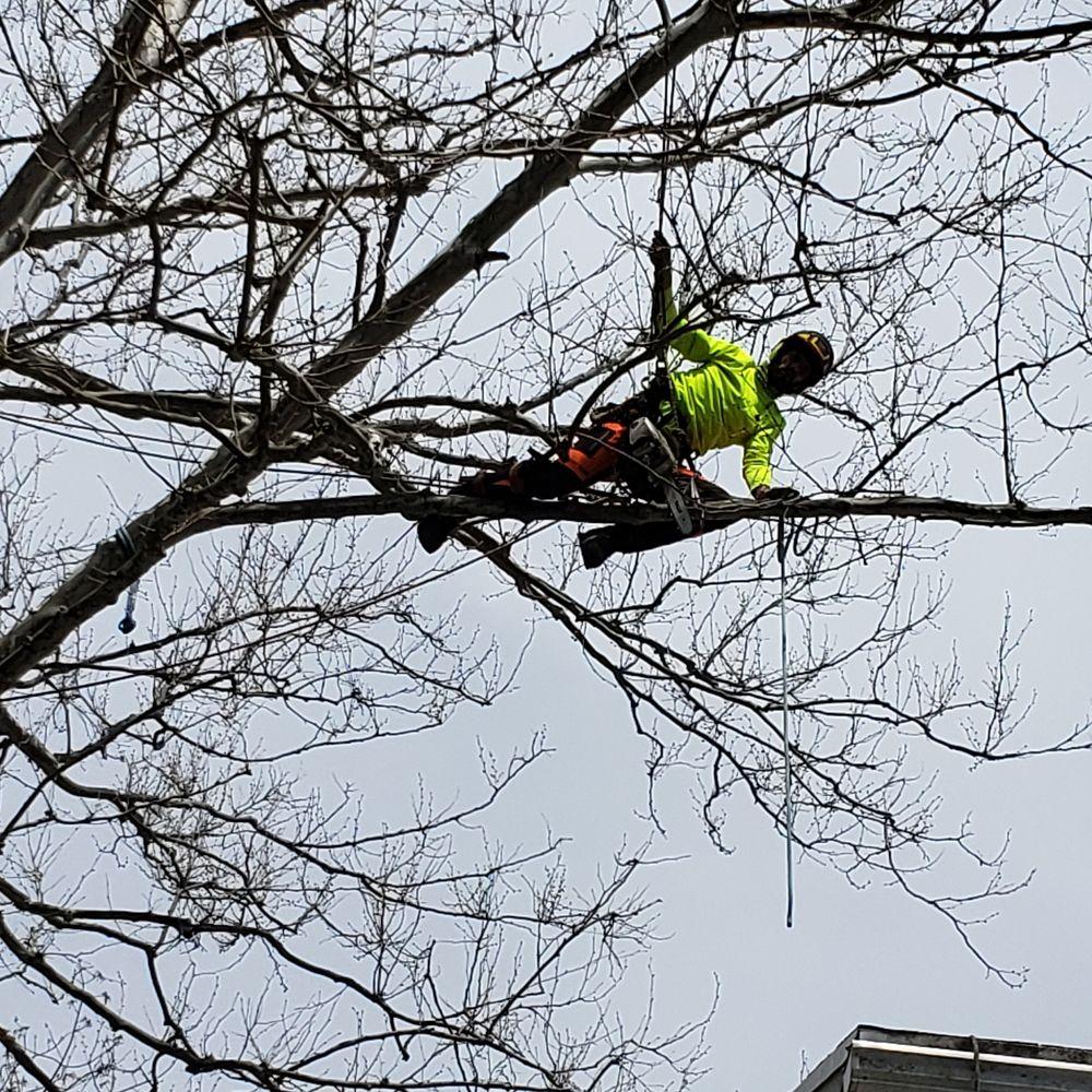 ABC Tree Monkeys: Halifax, PA