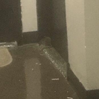 Photo Of Lefrak City Corona Ny United States Huge Rat In Front