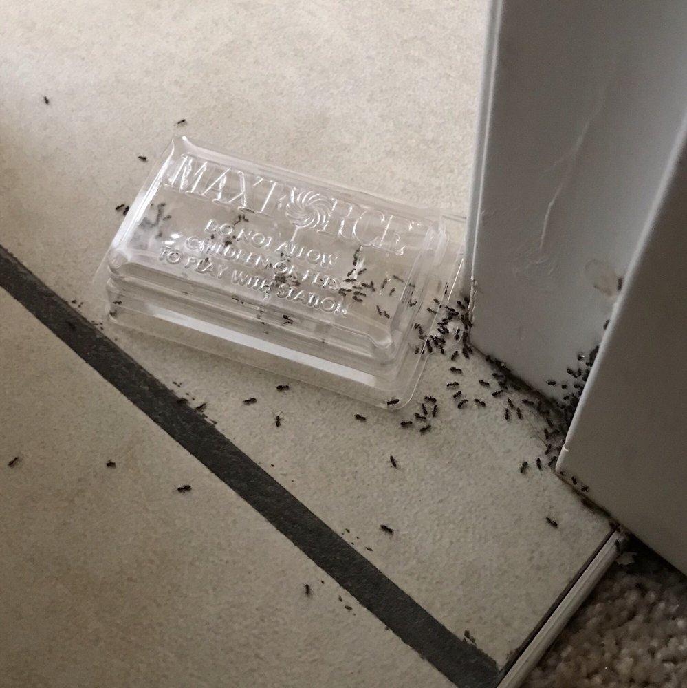 Bayside Service Pest Control: Allyn, WA