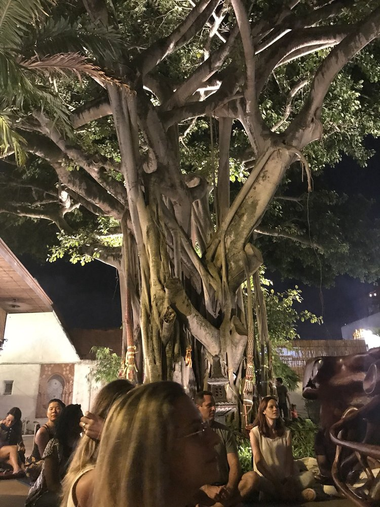 5ee619ed247ce 300 year old banyan tree (apparently used in Avatar with CGI!) - Yelp