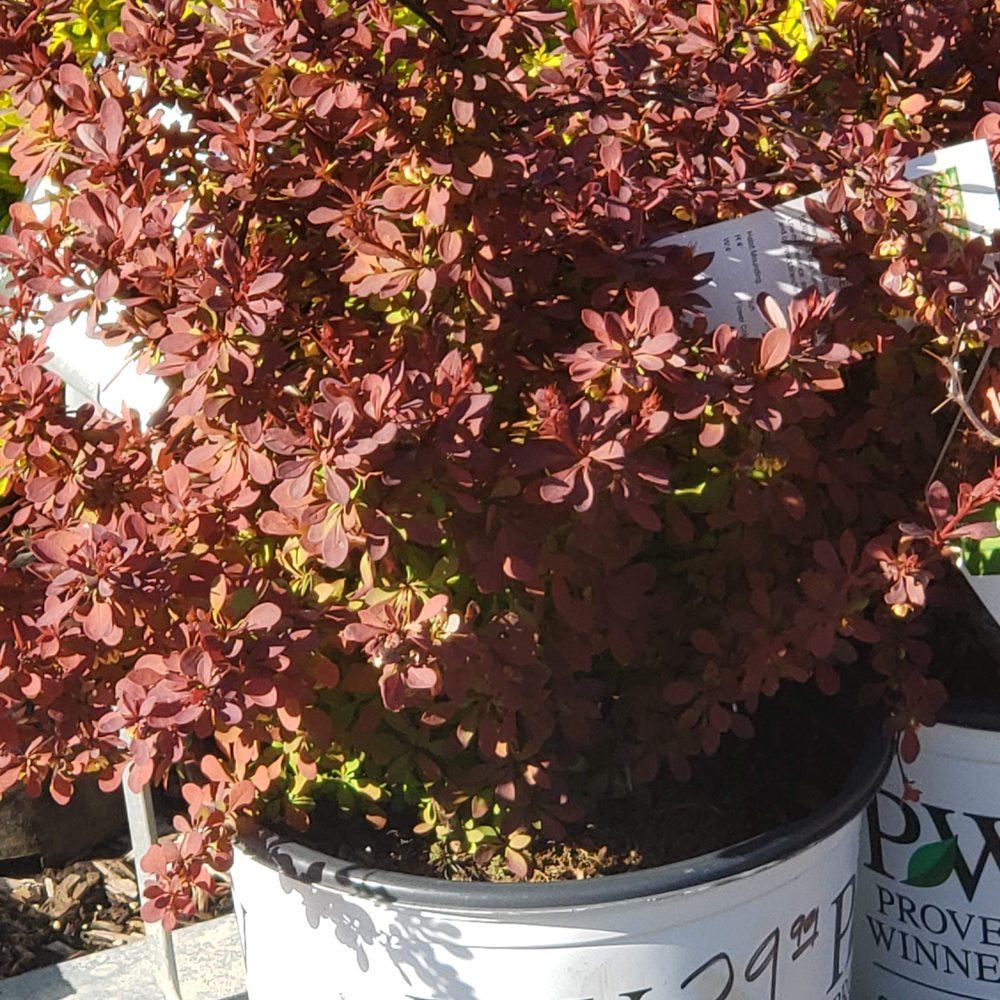 Rolling Meadows Landscape & Garden Center