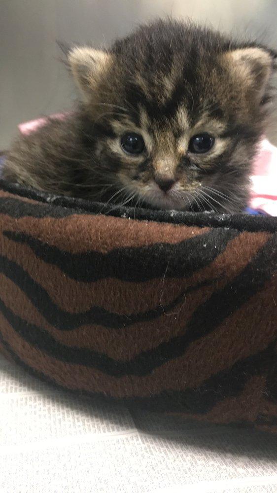 Compassion Animal Hospital: 11088 Marsh Rd, Bealeton, VA
