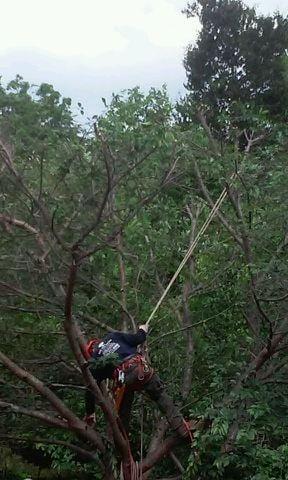 ADM Tree Services: Leesburg, VA