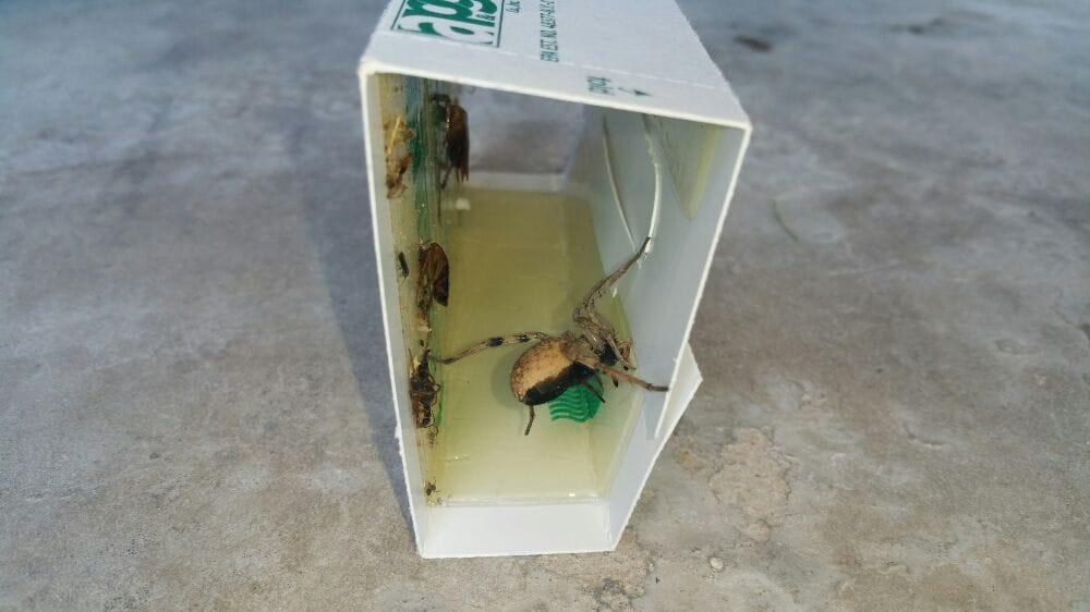 Apex Pest Control: El Paso, TX