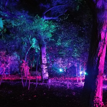 Enchanted forest of light at descanso gardens temp - Descanso gardens enchanted forest of light ...