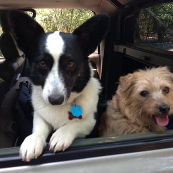 Sadie & Rugby happily on the way to Kindred Spirit Pet Care