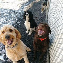 Best Dog Groomer Near Cobleskill Ny 12043 Last Updated January