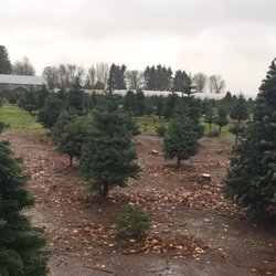 Palmer's Christmas Tree Farm - 13 Photos - Christmas Trees - 4716 ...