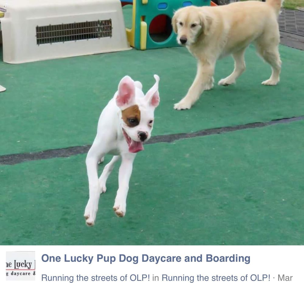 One lucky pup dog daycare boarding 14 reviews pet for Dog boarding places near me