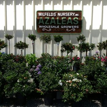 Photo Of Elds Azalea Nursery Riverside Ca United States